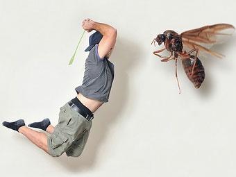 Как избавиться от мух без проблем для здоровья