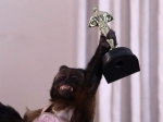 Обезьяну наградили закинематографические заслуги