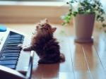 Ноктюрн для кошки соркестром