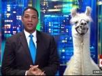 Ведущий CNN взял интервью уламы впрямом эфире