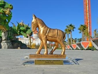 Необычная лошадка поселилась в«Сочи Парке»