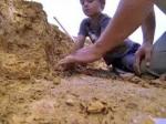 ВТехасе ребенок нашел останки динозавра жившего около 100 млн лет назад
