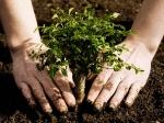Дворы ВАО ждет озеленение