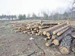 Третий лесной пожар произошел вПодмосковье ввоскресенье