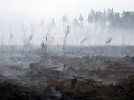 Лес горит натерритории семи районов Бурятии
