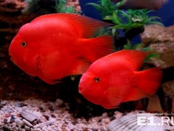 ВЕкатеринбурге был похищен аквариум за300 тысяч рублей сэкзотическими рыбами