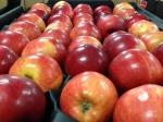 ВОренбурге арестовали более 30 тонн польских яблок