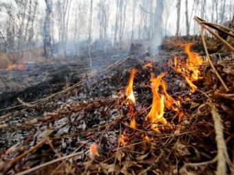 Пожар вУтае мог начаться из-за неконтролируемого пала травы— Глава МЧС Приангарья