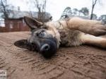 Догхантеры устроили травлю собак вподмосковном приюте