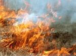 Рослесхоз предложил законодательно запретить сжигание сухой травы