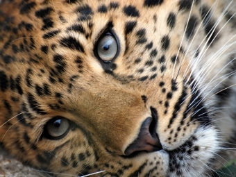 Встолице могут ввести запрет насодержание диких животных вквартирах