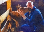 Накамчатской ферме корова воспитывает лосенка-сироту