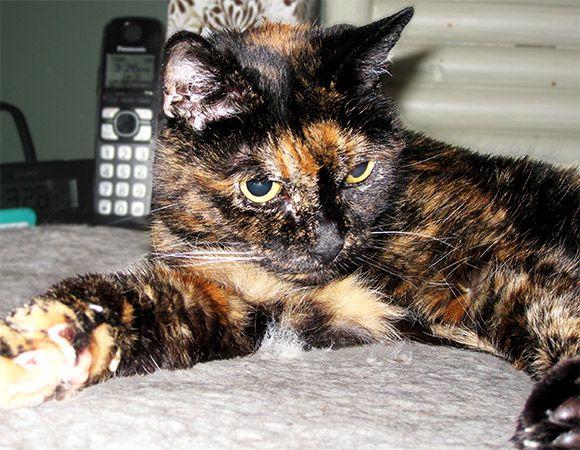 ВСША умерла старейшая кошка вмире ТиффаниII