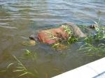 ВПетербурге натерритории Александровского парка обнаружили труп 37-летнего мужчины