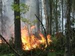 Площадь лесных пожаров вБурятии засутки выросла натысячу гектаров