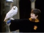 Продолжение истории про Гарри Поттера выйдет втеатре