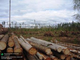 РФможет перестать торговать лесом сФинляндией