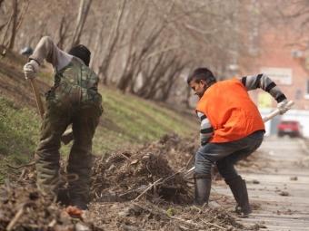 Русские студенты будут помогать убирать Ялту отмусора