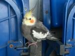 «Зенит» разыскивает хозяина попугая, прилетевшего настадион «Петровский»