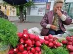 В России запрещен ввоз ростков редиса и свеклы из Египта