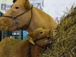 ВМоскве стартовала Международная выставка животноводства иплеменного дела «АгроФарм-2015»