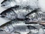 Стоимость мороженой рыбы врозничных сетях края будет ограничена