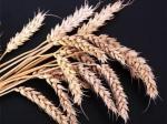 Россия планирует увеличить экспорт зерна