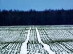 Волгоградские аграрии получат полмиллиарда рублей напосевную