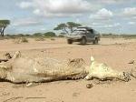 США направят еще 17 млн долларов на спасение жителей Сомали