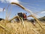 Минсельхоз ожидает вэтом году урожай зерна в100 миллионов тонн