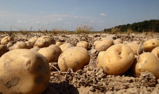 Россельхознадзор отметил ухудшение надзора засельхозпродукцией наУкраине