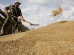 Иран начал переговоры по закупкам зерна у России в обход санкций