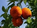 Кипр назад к апельсиновой республике
