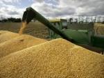 В 2013-м году в мире был выращен рекордный урожай пшеницы