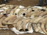 Стоимость слоновой кости на аукционе достигала 1000 евро за 1 кг