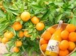 Цены на фрукты в Японии бьют рекорды