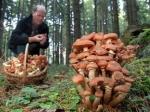 Роспотребнадзор призывает к осторожности при сборе грибов