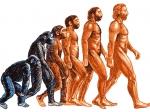 Ученые уверены, что эволюция человечества будет продолжаться