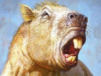 Европейские палеонтологи изучили останки гигантского древнего грызуна