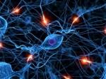 Взаимодействие нейронов напоминает общение друзей всоцсети— Ученые
