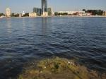 Уровень загрязнения воды в Неве и Финском заливе превысил допустимые нормы