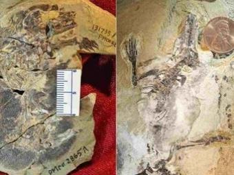 ВКитае обнаружены останки древнейших белок икрота