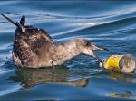 Вморскую среду ежегодно попадает 8 млн тонн пластиковых отходов
