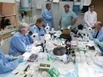 Ученые: Мыши помогли найти причину ухудшения зрения уастронавтов