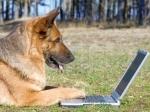 Ученые: извсех животных только собаки умеют сопереживать людям