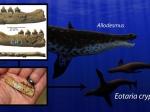 Ученые обнаружили старейшего ископаемого морского котика