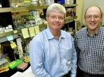 Ученые: Матери передают детям свои черты через ДНК бактерий