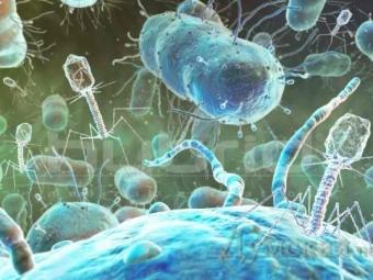 Вирус изсточных вод вылечит опасную инфекцию