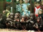 Жизнь обезьян поставлена под угрозу— Ученые
