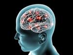 Ген «HARES» подарил людям большие мозги— Ученые